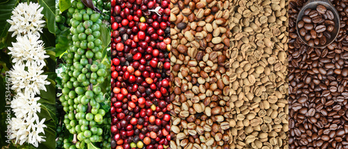 Fotografia Mix of coffee beans and coffee tree blossom for background