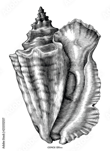 Foto Antique engraving illustration of Conch black and white clip art isolated on whi