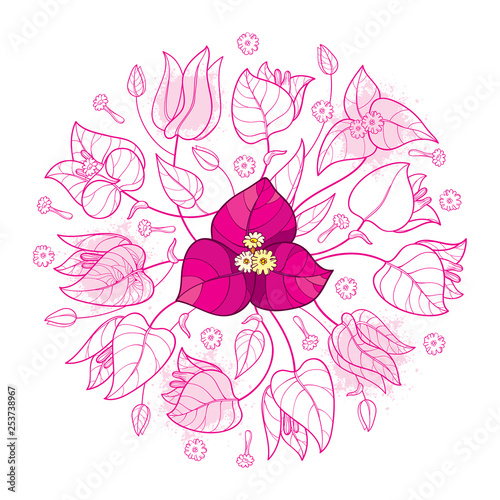 Cuadros en Lienzo Round bouquet of outline Bougainvillea flower bunch with bud and leaf in pastel pink isolated on white background