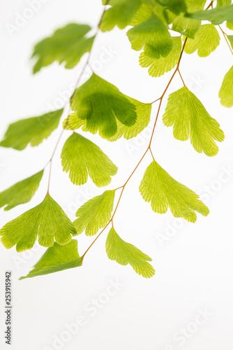Naklejka na szafę Zieleń liści
