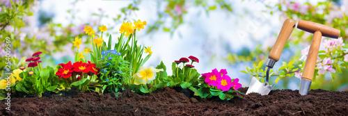 Fotografia Planting spring flowers in sunny garden