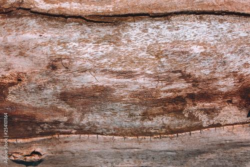 Fototapeta Textured texture of burnt bark of a tree