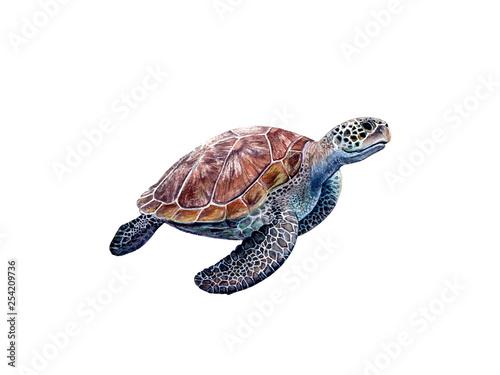 Fototapeta Watercolor hand drawn sea turtle realistic illustration isolated on white