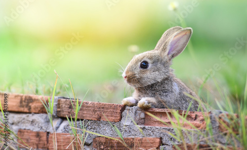 Foto Cute rabbit sitting on brick wall and green field spring meadow / Easter bunny h