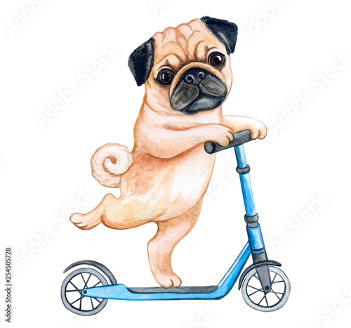 Wallpaper Mural Cute Puppy pug  on a scooter isolated on white background
