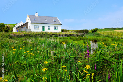 Slika na platnu Small white house in the countryside of Ireland with lush green front yard of wi
