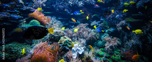Photo underwater coral reef landscape  with colorful fish