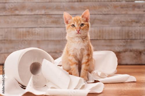 Fototapeta Cute orange tabby kitten sitting on the remains of toilet paper roll