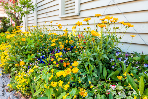Canvas Print Many yellow orange and blue flowers in large flower pots flowerpots or flowerbed