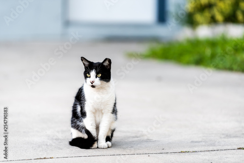 Photo Stray black and white cat with yellow eyes sitting on on sidewalk pavement drive