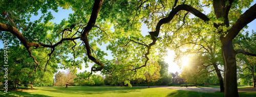 Fotografie, Tablou Tranquil panoramic scenery in a beautiful park