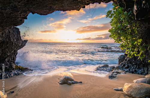 Canvas Print Turtles in a Cave
