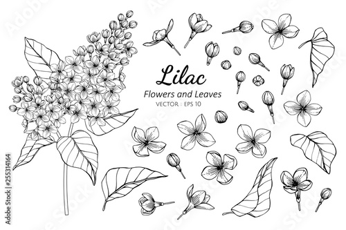 Canvas-taulu Collection set of lilac flower and leaves drawing illustration.