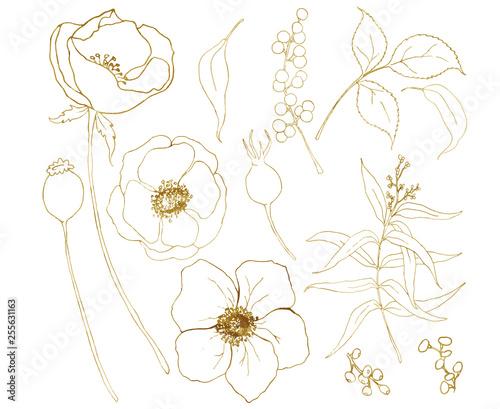 Photo Vector golden sketch anemone bouquet big set