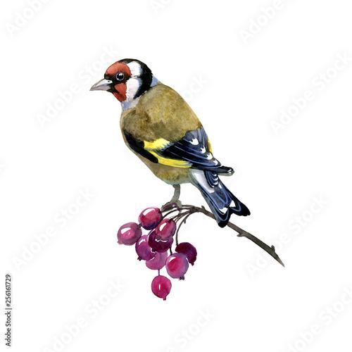 Carta da parati watercolor bird spring