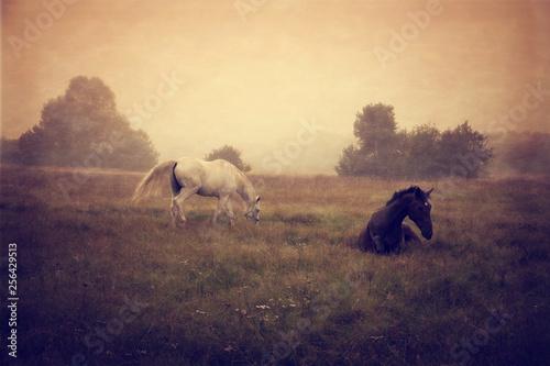 konie pasące się na łące wypoczywające #256429513