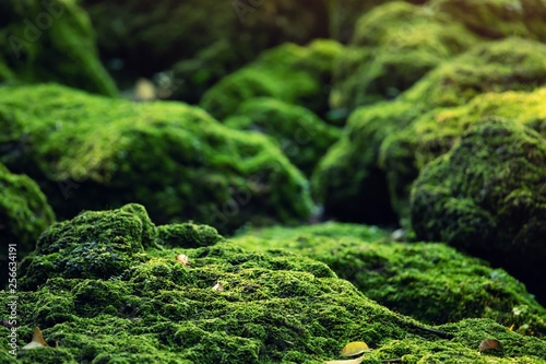 Photo Beautiful Bright Green moss grown up cover the rough stones and on the floor in the forest