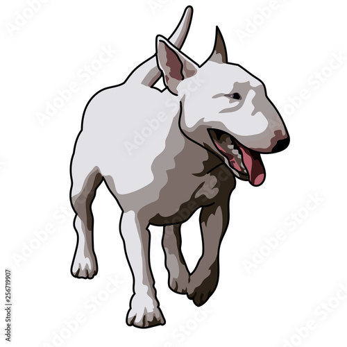 Fotografía white bull terrier dog