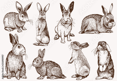Foto Graphical vintage set of bunnies ,vector retro illustration.
