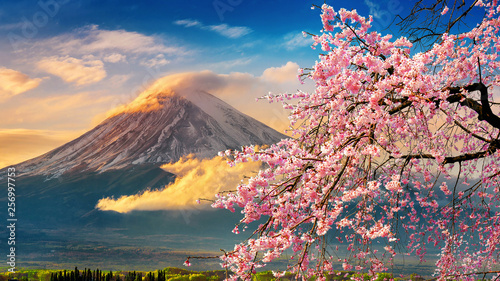 Foto Fuji mountain and cherry blossoms in spring, Japan.