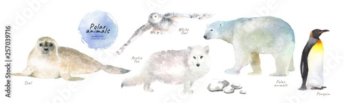 Fotografiet Watercolor illustrations of polar northern animals: seal, white owl, arctic fox,