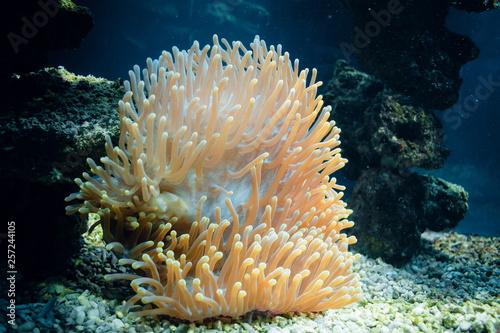 Valokuva Exotic underwater coral colony.