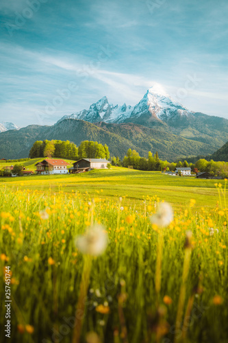 Fotografia, Obraz Idyllic landscape in the Alps with blooming meadows in springtime