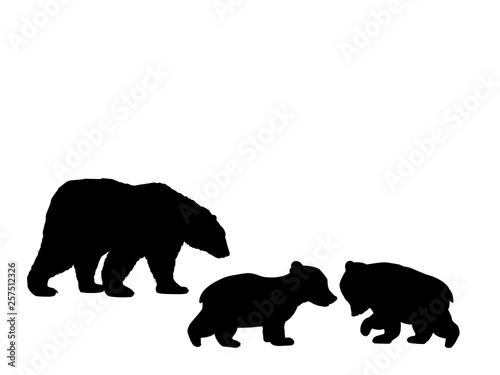 Fototapeta Bear family two bear cubs black silhouette animals