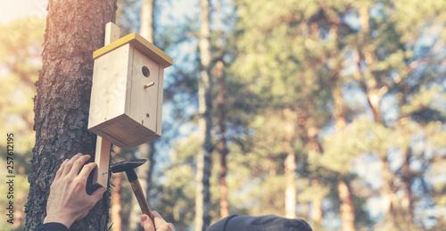 Photo ornithologist installing birdhouse on the tree trunk