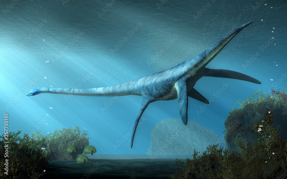 An elasmosaurus swims away from you in shallow seas. This long necked plesiosaur was an aquatic reptile that lived in the ocean during the Cretaceous period. 3D Rendering <span>plik: #257738161   autor: Daniel</span>