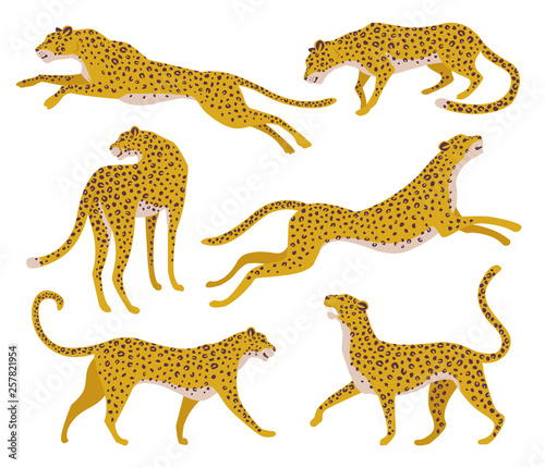 Photo Set of abstract silhouettes of leopards. Vector hand draw design.
