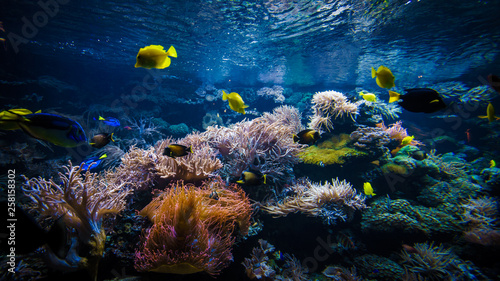 Stampa su Tela underwater coral reef landscape  with colorful fish