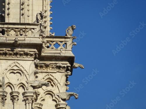 Fototapeta Gargoyles in Paris