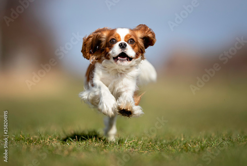 Valokuva Portrait of a dog