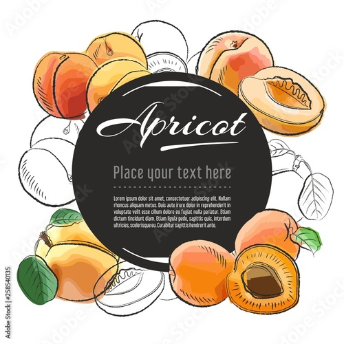 Stampa su Tela Vector sketch apricot banner on white background