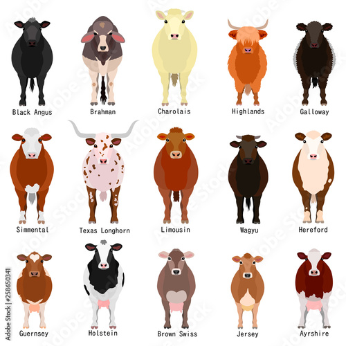 Obraz na plátne cattle chart with breeds name