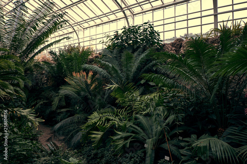 Fotografía Tropical path with green tropical plants, palms and catuses at famous botanical