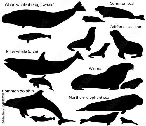 Leinwand Poster Collection of silhouettes of marine mammals and its cubs: california sea lion, c