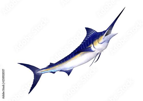 3D Rendering Marlin Fish on White Fototapeta