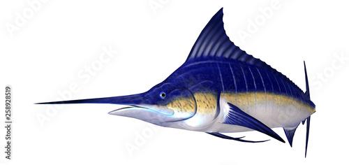 Obraz na płótnie 3D Rendering Marlin Fish on White