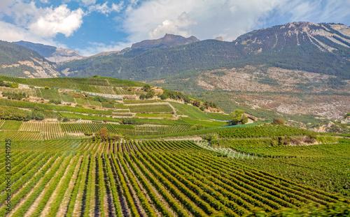 Canvas Print vineyard in switzerland
