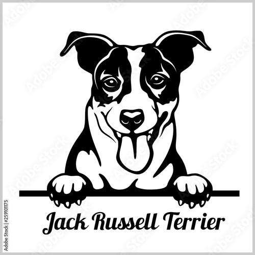 Canvas Print Jack Russell Terrier - Peeking Dogs - breed face head isolated on white