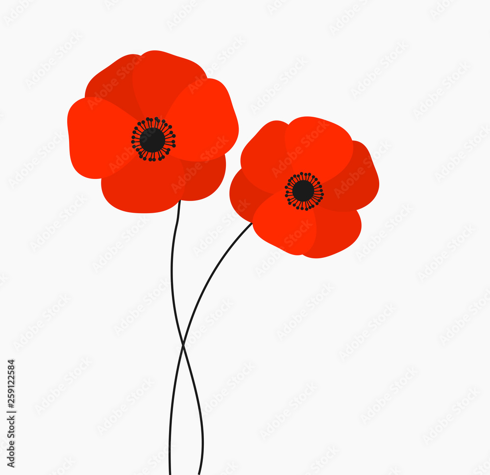 Two red poppies flowers growing isolated on white background. <span>plik: #259122584   autor: Studio Barcelona</span>