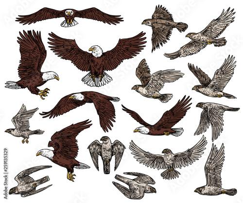 Fényképezés Birds of prey, predatory eagle and hawk falcons