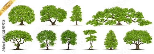 Trees Isolated on White Background