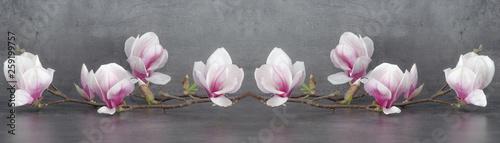 Mata na ścianę w kuchni  panorama-galezi-magnolii-na-bialym-tle-na-antracytowym-tle-dlugi-baner-panoramy