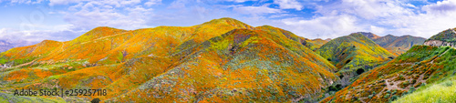 Fotografie, Obraz Panoramic view in Walker Canyon during the superbloom, California poppies coveri