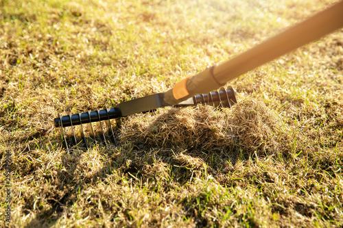 garden lawn aeration with scarifier rake Fototapeta