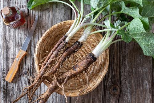 Vászonkép Burdock plants with roots and with burdock tincture