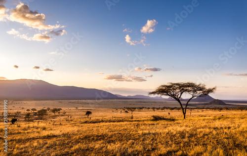 Canvas Print Sunset at savannah plains